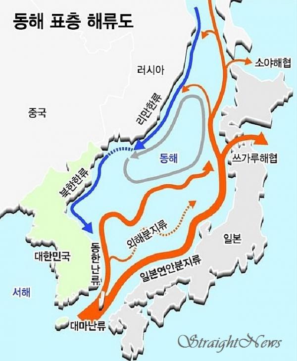 ▲동해로 유입되는 대마난류 지류 증 첫 번째 지류는 일본 연안을 따라, 두 번째 지류는 동해 외해를 따라 북상하고, 세 번째 지류는 동해안 연안을 따라 북상하다가 주문진, 삼척 연안에서 동쪽으로 방향을 틀어 울릉도와 독도 해역을 향해 진행한다. 북쪽에서는 연해주해류, 리만한류로 불리던 해류가 북한한류로 이름을 바꿔 남하한다.(국립해양조사원KHOA)스트레이트뉴스